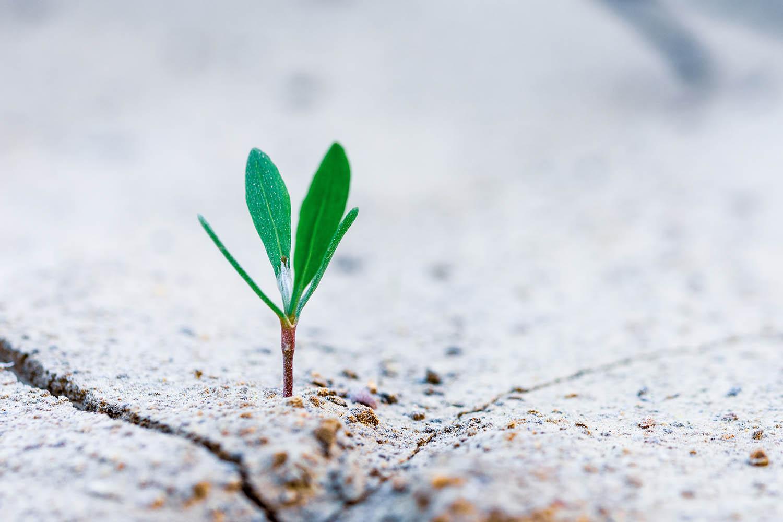 6 façons dont un coach de vie  va vous aider à atteindre votre plein potentiel